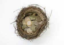 Nido di un uccello con le monete Immagine Stock Libera da Diritti