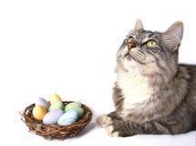 Nido e gatto degli uccelli Immagine Stock Libera da Diritti