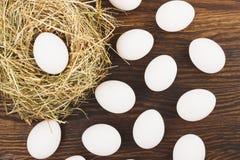 Nido e molte uova bianche Fotografia Stock Libera da Diritti