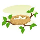 Nido ed uovo degli uccelli sul ramo di albero Immagini Stock