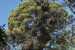 Nido enorme del ` dei pappagalli nel parco Immagini Stock