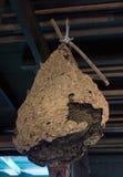 Nido gigante della vespa Fotografie Stock