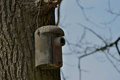 Nido per deporre le uova su un albero Fotografia Stock