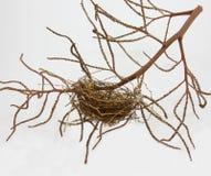 Nido vuoto degli uccelli isolato su fondo bianco Fotografie Stock Libere da Diritti