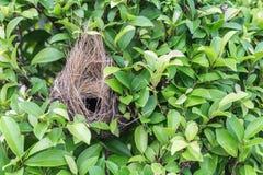 Nido vuoto dell'uccello sull'albero immagini stock