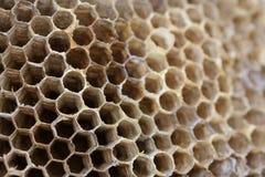 Nido vuoto della vespa. Fotografia Stock