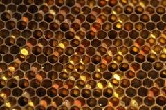 Nids d'abeilles avec du miel Photographie stock
