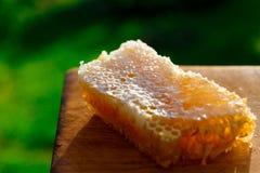 Nids d'abeilles avec du miel Photos libres de droits
