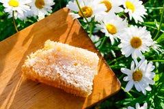 Nids d'abeilles avec du miel Image stock