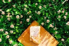 Nids d'abeilles avec du miel Image libre de droits