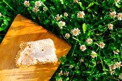 Nids d'abeilles avec du miel Images libres de droits