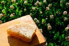 Nids d'abeilles avec du miel Photographie stock libre de droits