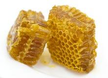 Nids d'abeilles de miel Photographie stock libre de droits