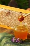 Nids d'abeilles de miel et fleur d'un Phacelia sur une soucoupe Image libre de droits