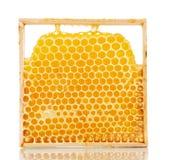 Nids d'abeilles doux avec du miel Photos libres de droits