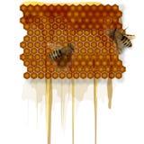 Nids d'abeilles, miel, et abeilles se reposantes Illustration réaliste de vecteur sur le fond blanc illustration stock