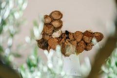 nids d'hirondelle images stock