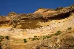 Nids d'hirondelle dans la falaise de grès Image libre de droits