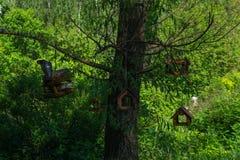 Nids d'oiseau accrochant dans l'arbre, repos de pigeons images libres de droits