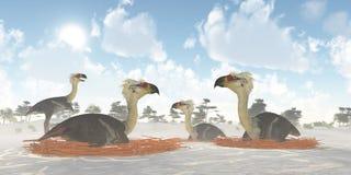 Nids d'oiseau de Phorusrhacos Photographie stock libre de droits