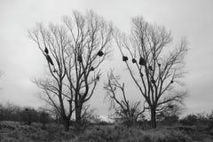 Nids de perroquets Photos libres de droits