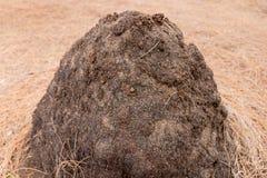 Nids de termite Image stock
