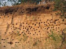 Nids pour des oiseaux dans l'argile du côté d'une falaise Photographie stock