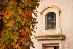 Nids sauvages de vin en automne sur la façade d'une maison image stock