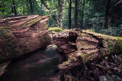 Nieżywy drzewo w dżungli obraz stock