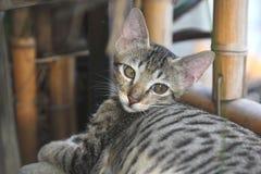 Nieśmiały kot zdjęcia royalty free