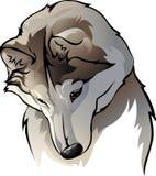 Nieśmiały wilk Zdjęcia Royalty Free