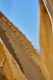 Nieżywa agawy roślina Zdjęcia Stock