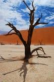 Nieżywa akacja w Deadvlei. Sossusvlei, Namib-Naukluf fotografia royalty free