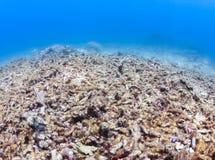 Nieżywa, bieląca rafa koralowa, Fotografia Royalty Free