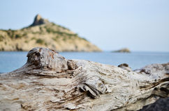 Nieżywa gałąź w przedpolu morze Fotografia Royalty Free