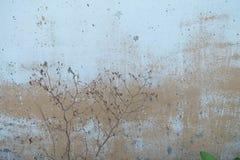 Nieżywa mała roślina na starej porysowanej ścianie obraz royalty free