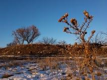 Nieżywa roślina na niebieskiego nieba tle zdjęcia stock