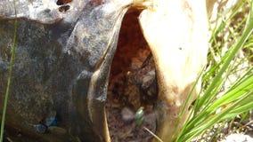Nieżywa ryba z dżdżownicami zbiory