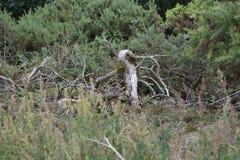 Nieżywe drzewne kończyny Fotografia Royalty Free