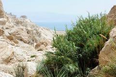 Nieżywego morza góry obrazy royalty free
