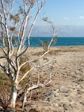 Nieżywego morza plaża z Jordanowskimi ` s górami w tle Zdjęcia Stock