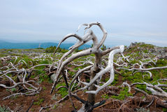 nieżywi łąkowi drzewa obrazy stock
