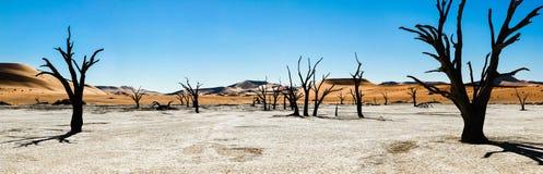Nieżywi drzewa i diuny w solankowej niecce africa pustynni gorący nie rockowi piaski tam nawadniają Obrazy Stock