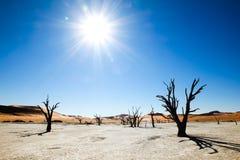 Nieżywi drzewa i diuny w solankowej niecce africa pustynni gorący nie rockowi piaski tam nawadniają Zdjęcia Stock
