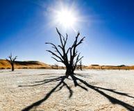 Nieżywi drzewa i diuny w solankowej niecce africa pustynni gorący nie rockowi piaski tam nawadniają Obrazy Royalty Free