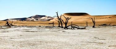 Nieżywi drzewa i diuny w solankowej niecce africa pustynni gorący nie rockowi piaski tam nawadniają Obraz Stock
