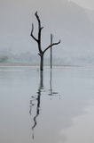 Nieżywi drzewa w ranku zaparowywają w jeziorze w tamie i odbiciu, Th Obraz Stock
