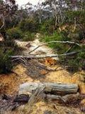 Nieżywi drzewni bagażniki na piaskowatej ścieżce w Australijskim krzaku Fotografia Stock