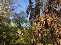 Nieżywi jesień liście Las, drzewa Zdjęcie Stock