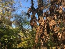 Nieżywi jesień liście Las, drzewa Fotografia Stock